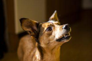 in home dog training brisbane | Brisbane In home dog training