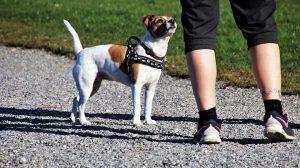 dog trainer | Dog training Brisbane