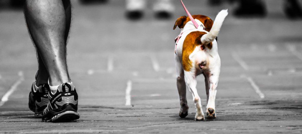 courses | Dog Training Brisbane