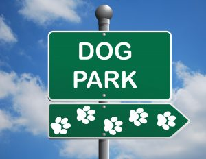 Why A Dog Behaviourist Will Say Avoid Dog Parks | Dog Trainers Brisbane