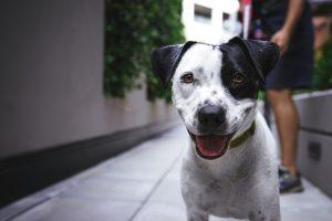 CHOOSING A DOG | DOG OBEDIENCE TRAINING