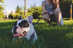 Do Different Dog Breeds Have Different Training Needs?