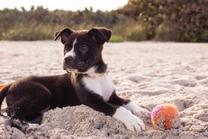 Biting and Mouthing | How To Stop Your Puppy Biting