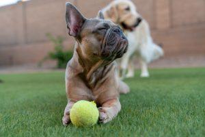 3 Awesome Dog Tricks to Teach Your Dog | Dog Training Brisbane