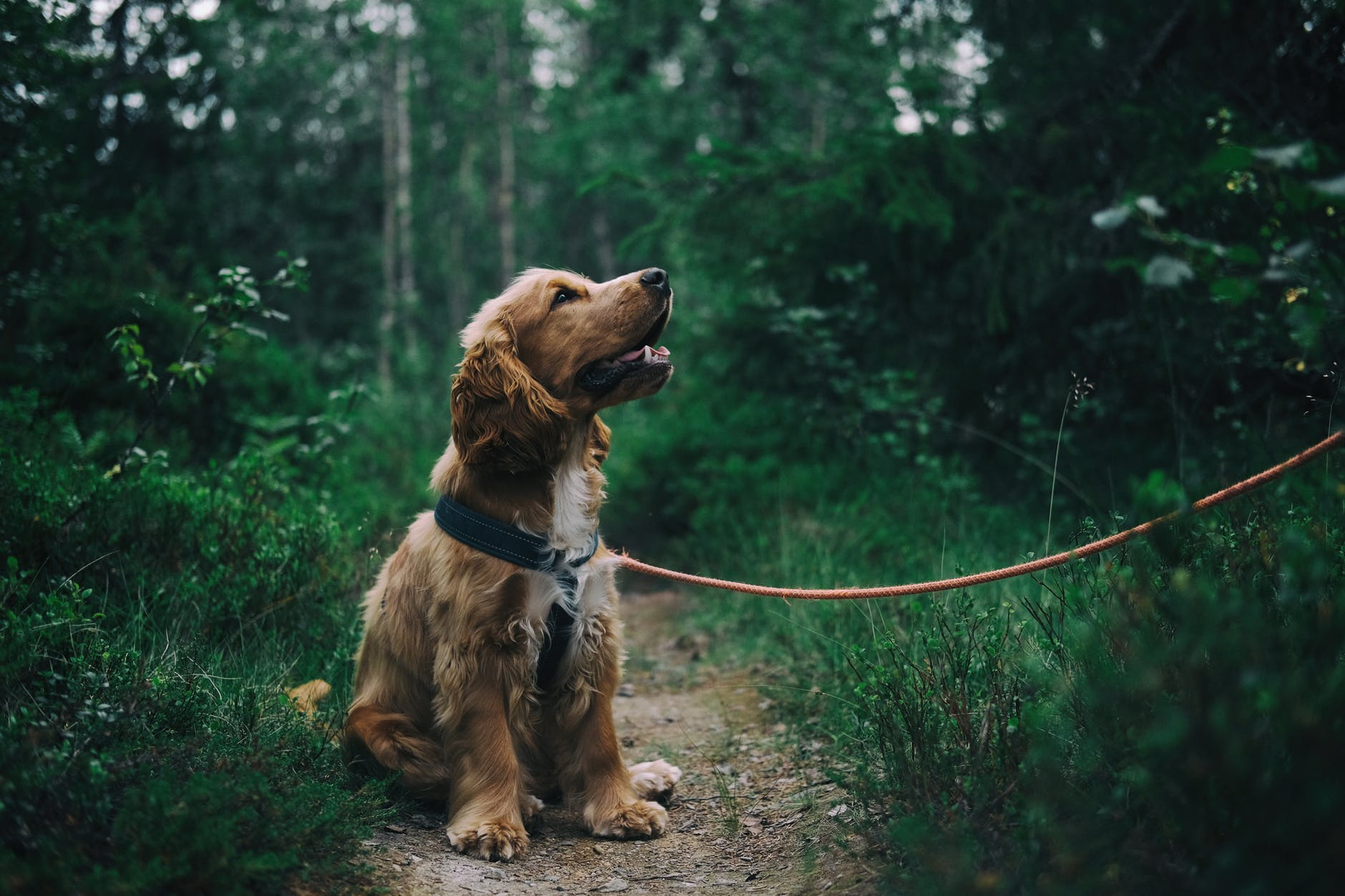 puppy school | Puppy training Brisbane