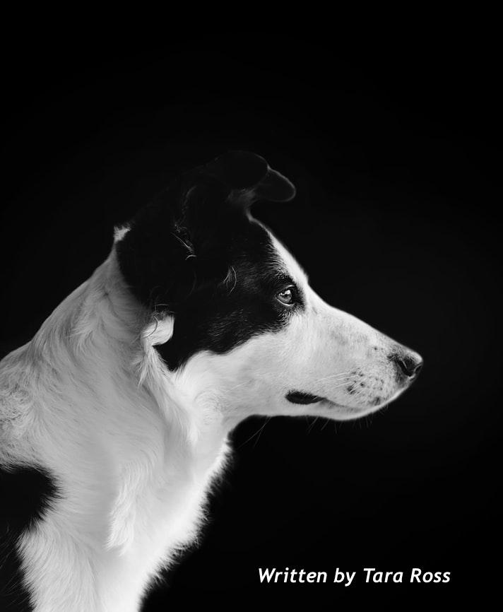 bark buster | Dog Behaviourist