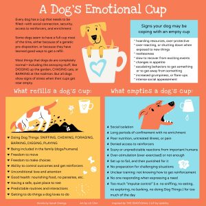 Dog's bucket list