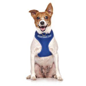 Assistance Dog & Public Access Test